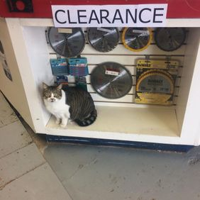 Cat in clearance section of the store